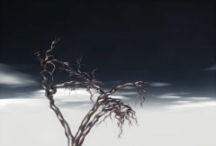 Ghost Tree - stock footage