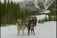 Dog sled team, #6 winter Stock Footage