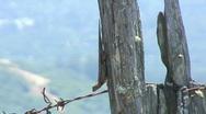 Lizard, California Stock Footage