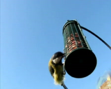 Birds Feeding Stock Footage