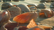 Stock Video Footage of Shells washed by sea