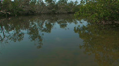 Everglade from Canoe 01 - stock footage