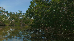 Everglade from Canoe 04 - stock footage