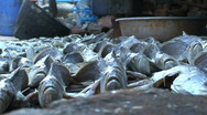 Stock Video Footage of fishmarket