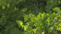 Plant Stock Footage