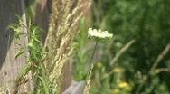 Country Farm Flower Stock Footage