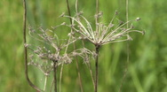 Grassy Flower Thing Stock Footage