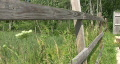 Flower Next To Wooden Fence Footage
