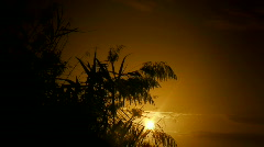 Marsh reeds at sunset Stock Footage
