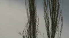 Sawgrass in storm Stock Footage