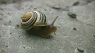 Stock Video Footage of Snail gets visit from mosquito.
