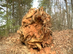 Uprooted Stock Footage