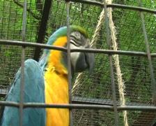 Parrot ara in zoo Stock Footage