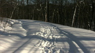 Wolf/Dog running & playing in snow-slow Stock Footage