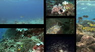 Stock Video Footage of Reef Scene Montage