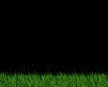 Grass PAL Stock Footage