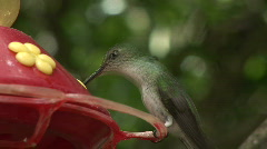 Hummingbird feeding Stock Footage