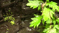 Water dripping off a leaf beside a waterfall Stock Footage