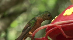 Hummingbirds compete 01 Stock Footage