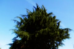Heavenly tree - stock footage