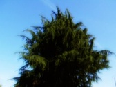 Heavenly tree Stock Footage