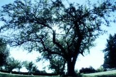 Sun tree2 blue - stock footage
