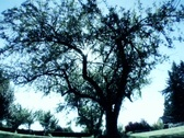 Sun tree2 blue Stock Footage