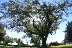 Sun tree2 - stock footage