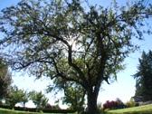 Sun tree2 Stock Footage