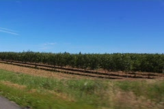 Vineyard pass Stock Footage