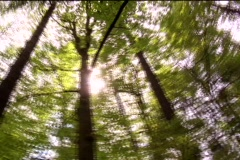 Trees circling Stock Footage