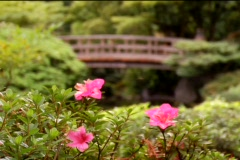 Bridge flowers japanesegarden Stock Footage