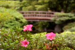 bridge flowers japanesegarden - stock footage