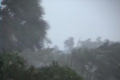 Hurricane Winds and Rain Stock Footage