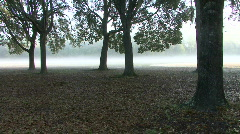 Magical Forest In The Mist 03 Stock Footage