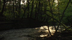 Creek in woods at day's last light Stock Footage