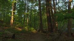 Dark forest, woods Stock Footage