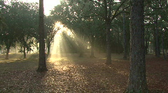 Mystical Beams Of Sunlight 08 Stock Footage