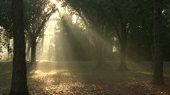 Mystical Beams Of Sunlight 07 Stock Footage