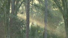 Mystical Beams Of Sunlight 05 Stock Footage
