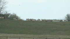 Sheep headbutt on skyline Stock Footage