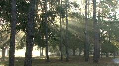 Mystical Beams Of Sunlight 04 Stock Footage