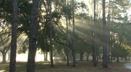 Stock Video Footage of Mystical Beams Of Sunlight 04