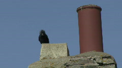 Jackdaw enters nest in chimney 2 Stock Footage