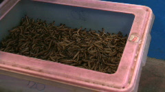 Worms squirming in a bucket Stock Footage
