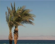 Palm trees couple Stock Footage