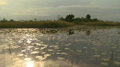 Airboat ride in the Florida Everglades swampland Stock Footage