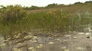 Stock Video Footage of Everglades_165 0296 01