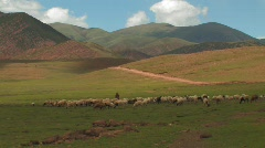 Flock of sheep in the mountains Tibet Stock Footage