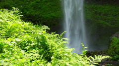 Foilage and Waterfall Stock Footage